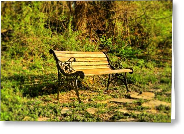 Andrew Martin Greeting Cards - Bench at the pond  Greeting Card by Andrew Martin