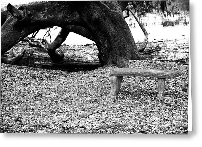 Stone Bench Greeting Cards - Bench by the Tree Greeting Card by John Rizzuto