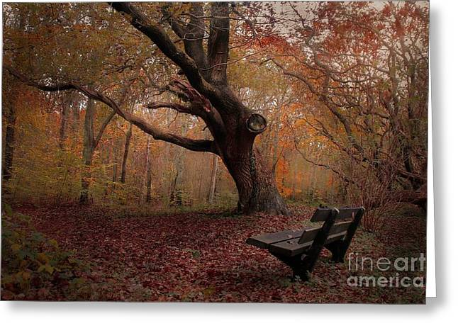 Dream Scape Greeting Cards - Bench in the forest in autumn colors Greeting Card by Hugo Bussen