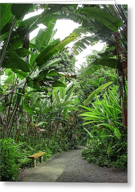 Bench In The Jungle - Hawaii Greeting Card by Daniel Hagerman