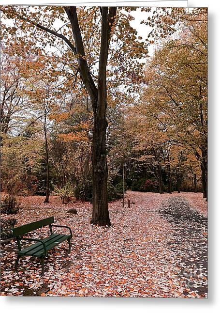 Colors Of Fall Greeting Cards - Bench in the park Greeting Card by Ivy Ho