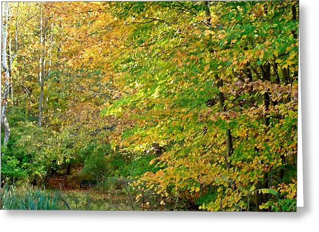 Indiana Autumn Greeting Cards - Bench in the woods Greeting Card by BackHome Images