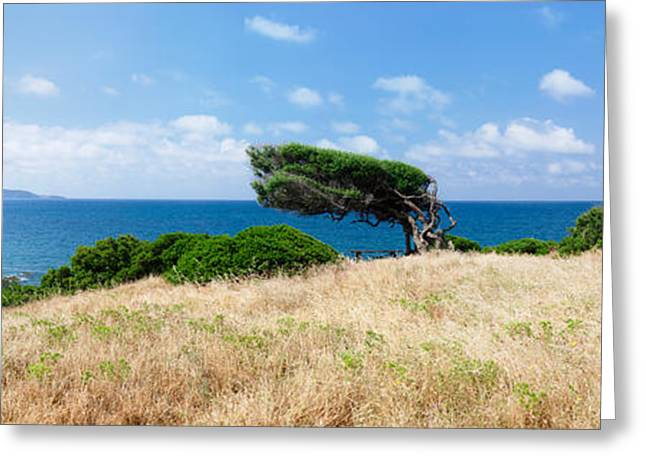 Color Bending Greeting Cards - Bended Trees On The Bay, Bay Of Greeting Card by Panoramic Images