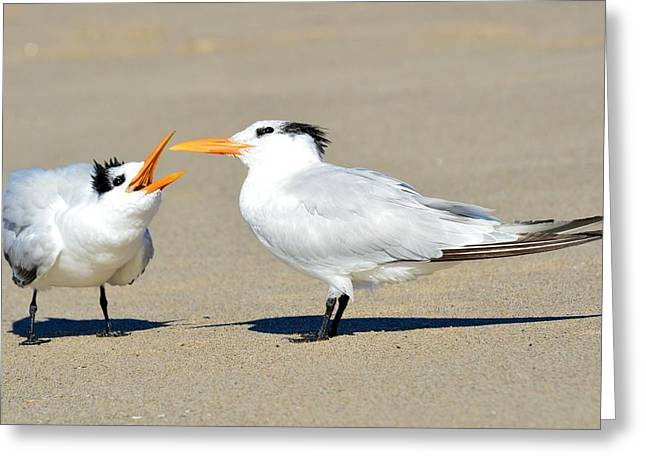 Tern Greeting Cards - Bending Moms Ear  Greeting Card by Fraida Gutovich
