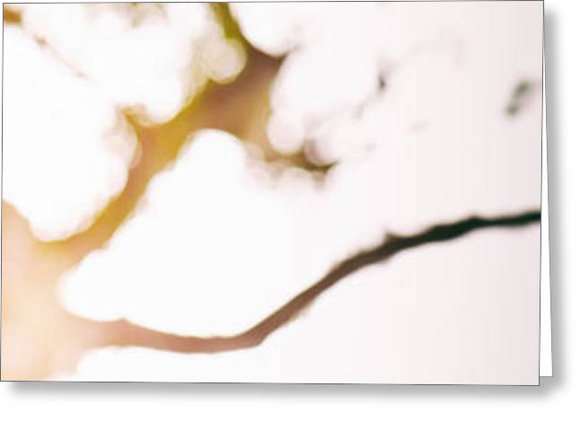 Beneath a tree 14 4945 triptych set 3 of 3 Greeting Card by Ulrich Schade