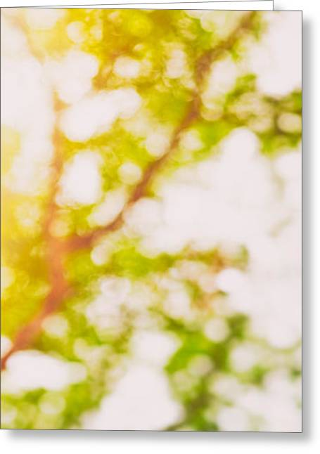 Red Abstracts Greeting Cards - Beneath a tree  14 5194  Diptych  Set 2 of 2 Greeting Card by Ulrich Schade