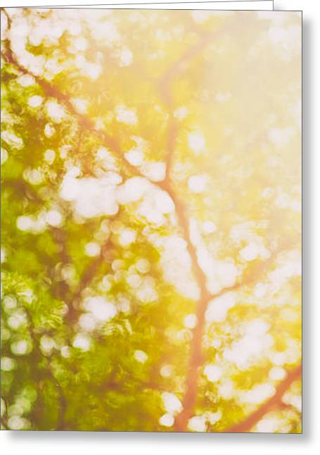 Recently Sold -  - Concept Photographs Greeting Cards - Beneath a tree  14 5199   Diptych  Set 1 of 2 Greeting Card by Ulrich Schade