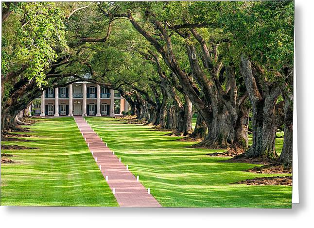 Oak Alley Plantation Greeting Cards - Beneath Live Oaks Greeting Card by Steve Harrington