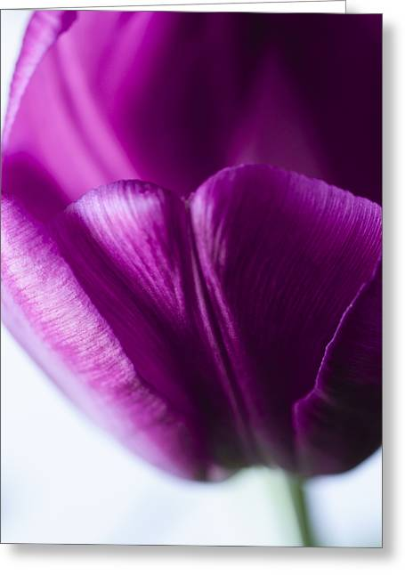 Close Focus Floral Greeting Cards - Beneath the Fold Greeting Card by Christi Kraft
