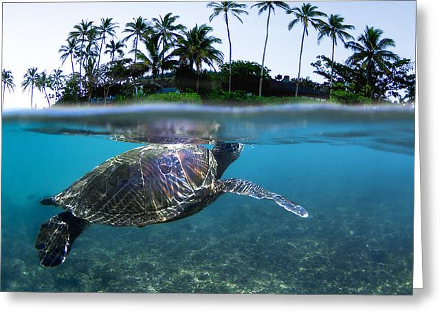 Sea Life Photographs Greeting Cards - Beneath The Palms Greeting Card by Sean Davey