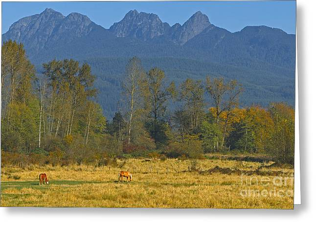Horse In Field Greeting Cards - Beneath the Peaks Greeting Card by Sharon  Talson