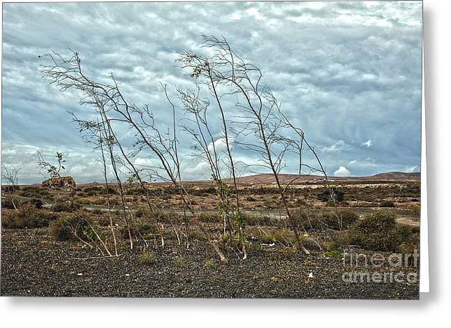 Bent Plants In The Wind Greeting Card by Patricia Hofmeester
