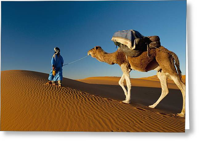 Simple Beauty In Colors Greeting Cards - Berber Leading Camel Across Sand Dune Greeting Card by Ian Cumming