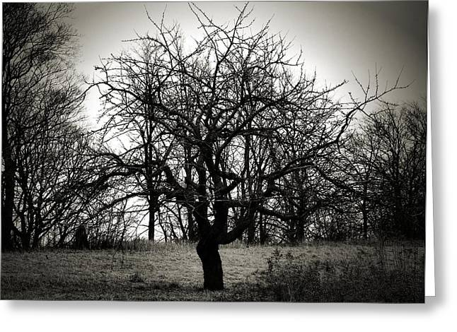 Eerie Greeting Cards - Bereft Greeting Card by Heather King