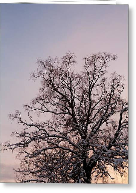 Bergen  Winter Tree Greeting Card by Hakon Soreide