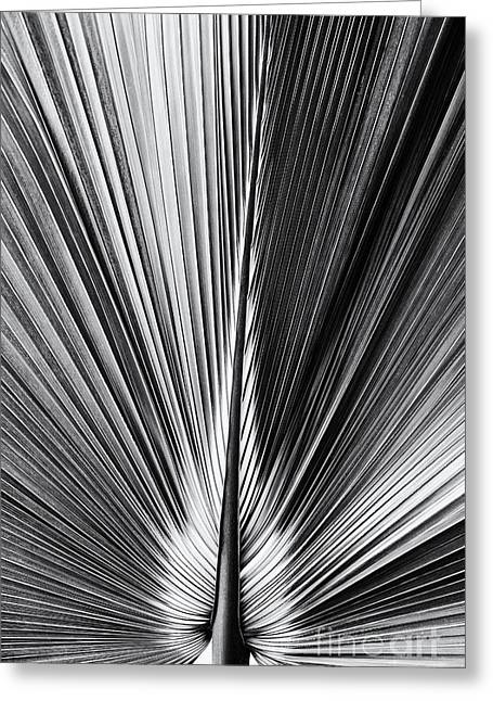 Frond Greeting Cards - Bermuda Palmetto Monochrome Greeting Card by Tim Gainey