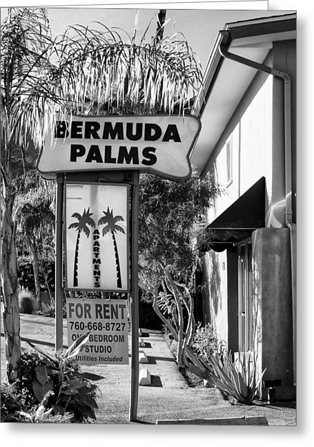 Southern Ca Greeting Cards - BERMUDA PALMS BW Palm Springs Greeting Card by William Dey