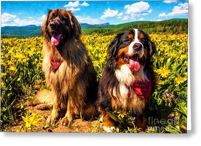 Leonberger Greeting Cards - Bernese Mountain Dog and Leonberger Among Wildflowers Greeting Card by Gary Whitton