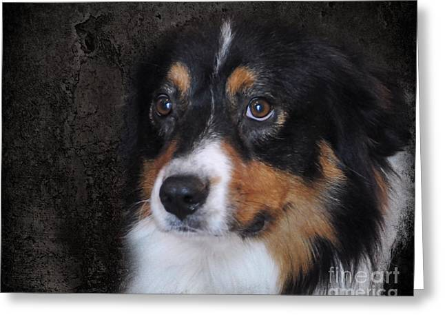 Working Dog Greeting Cards - Bernese Mountain Dog Greeting Card by Jai Johnson