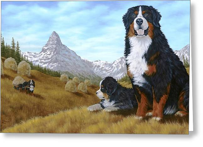 Domestic Dog Greeting Cards - Bernese Mountain Dog Greeting Card by Rick Bainbridge
