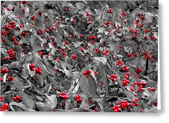 Fruit Tree Art Greeting Cards - Berries Greeting Card by Dan Sproul