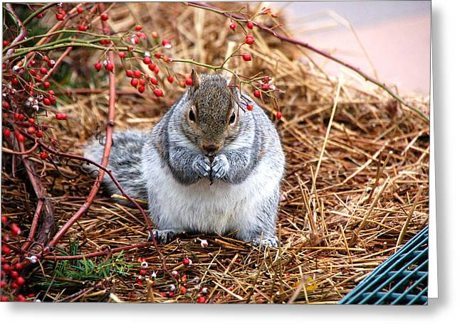 Berry Greeting Cards - Berries Good Greeting Card by Wayne Sheeler