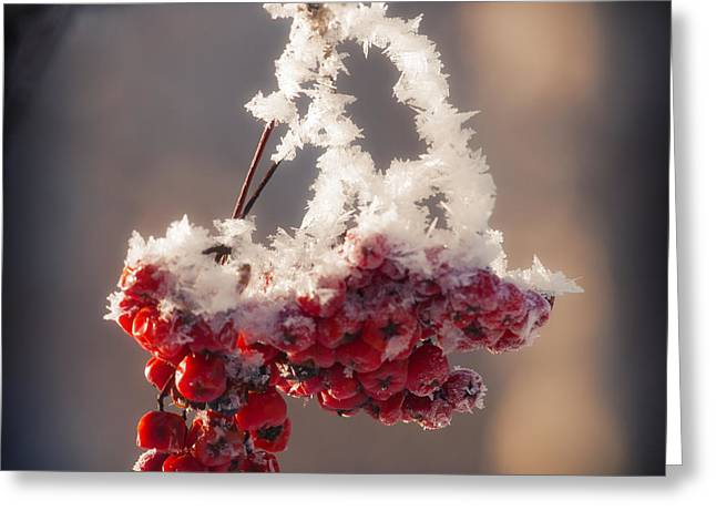 Forest Pyrography Greeting Cards - Berries in Ice Greeting Card by Konstantin Sevostyanov