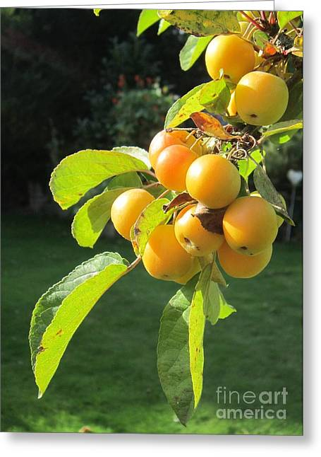 Berry Photographs Greeting Cards - Berries in Sunlight Greeting Card by John Clark