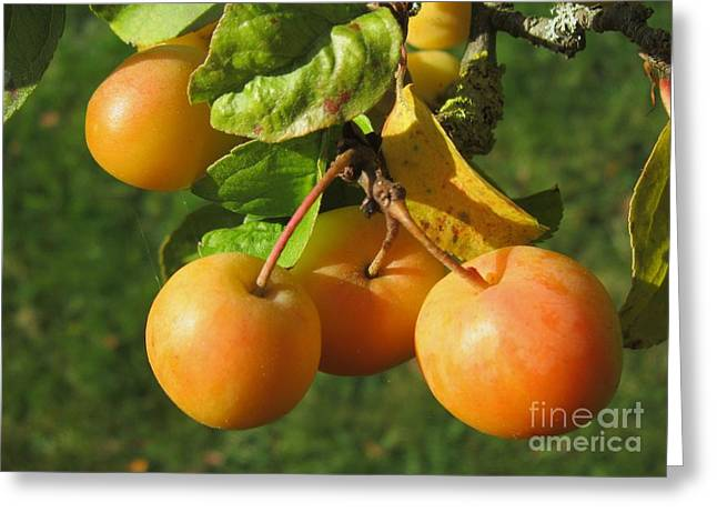 Berry Photographs Greeting Cards - Berries Greeting Card by John Clark