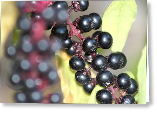 Berry Greeting Cards - Berries Greeting Card by Michele Wilson