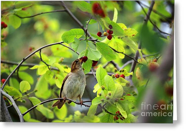 Feeding Birds Greeting Cards - Bird and Berries Greeting Card by Charline Xia