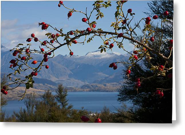 Aotearoa Greeting Cards - Berry good view Greeting Card by Jenny Setchell