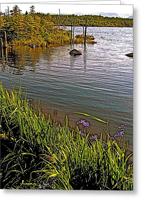 Pond In Park Greeting Cards - Berry Hill Pond in Gros Morne NP-NL Greeting Card by Ruth Hager