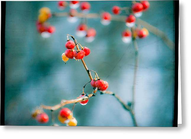 Berry Nice - Red Berries - Winter Frost Icy Red Berries - Gary Heller Greeting Card by Gary Heller