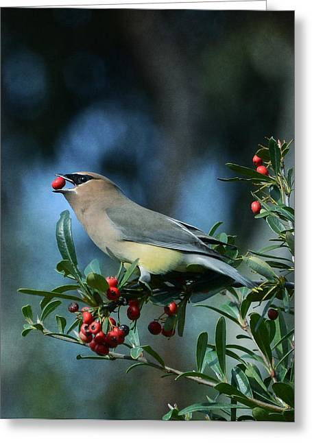 Cedar Waxwings Greeting Cards - Berry Picking Greeting Card by Fraida Gutovich