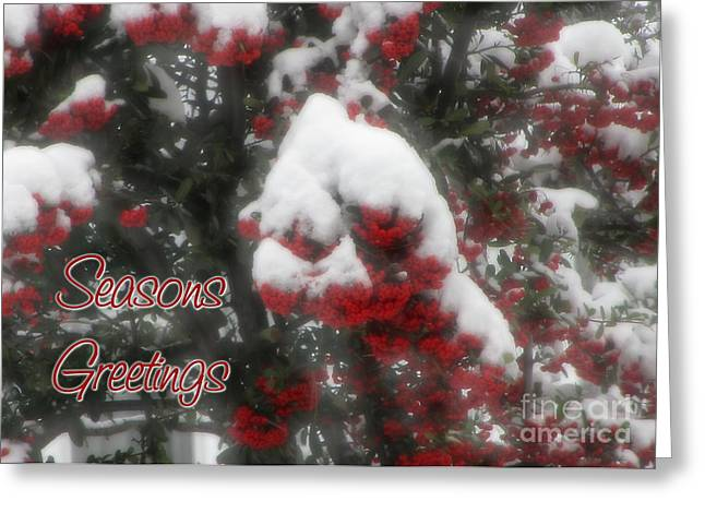Occasion Greeting Cards - Berry Seasons Greetings Greeting Card by JH Designs