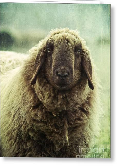 Wooly Greeting Cards - Besch da Pader Greeting Card by Priska Wettstein