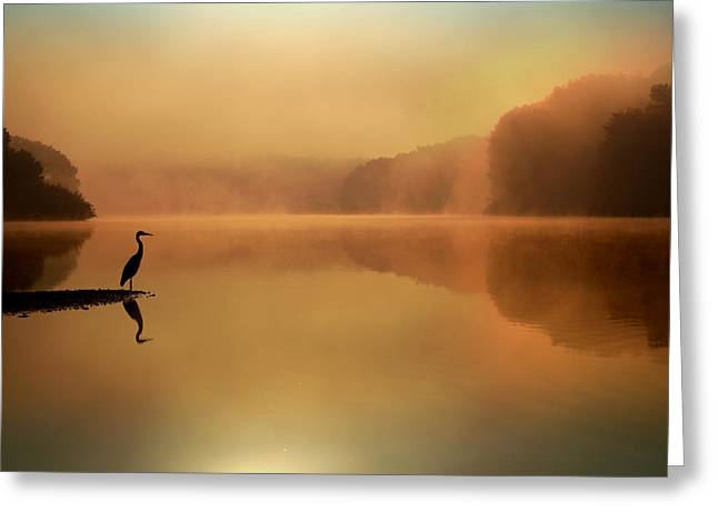 Blue Heron Greeting Cards - Beside Still Waters Greeting Card by Rob Blair