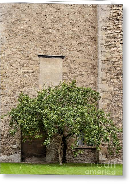 Next To Tree Greeting Cards - Beside the Wall Greeting Card by Svetlana Sewell