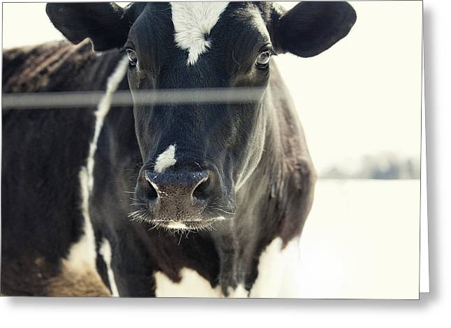 Black And White Cow Greeting Cards - Bessie Greeting Card by Lori Knisely