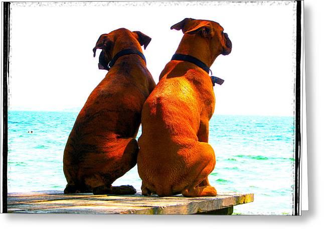 Best Friends Dog Photograph Fine Art Print Greeting Card by Laura  Carter
