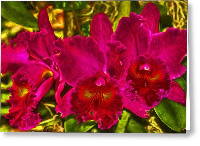 Cattleya Greeting Cards - Best In Show Greeting Card by HH Photography of Florida