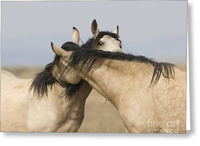 Wild Horse Greeting Cards - Best of Friends Greeting Card by Carol Walker
