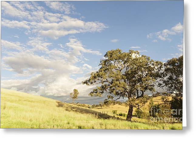 Gumtree Greeting Cards - Bethanga Greeting Card by Linda Lees