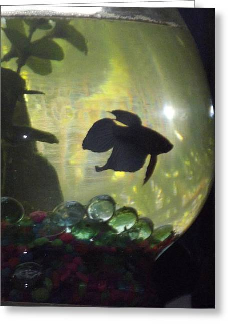 Betta Greeting Cards - Betta Silhouette  Greeting Card by Nikki Jauron
