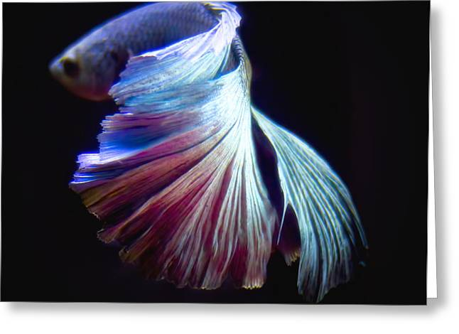 Betta Greeting Cards - BettaFish 4 Greeting Card by Philipe David
