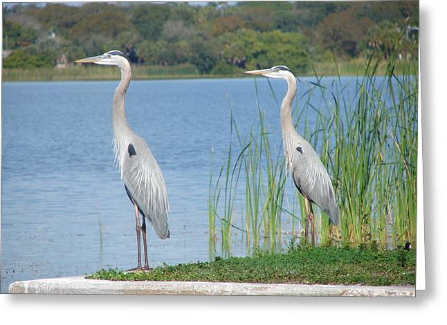 St Petersburg Florida Greeting Cards - Better Together Greeting Card by Sharon Rodriguez