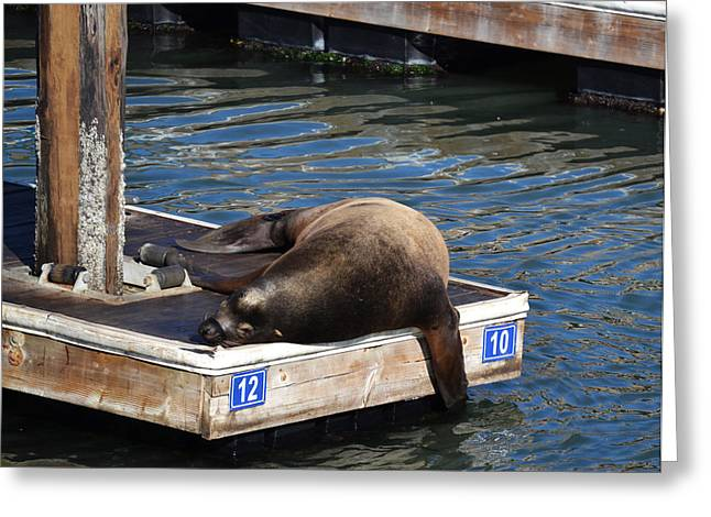 California Sea Lions Greeting Cards - Between 10 and 12 Greeting Card by Joe Bledsoe
