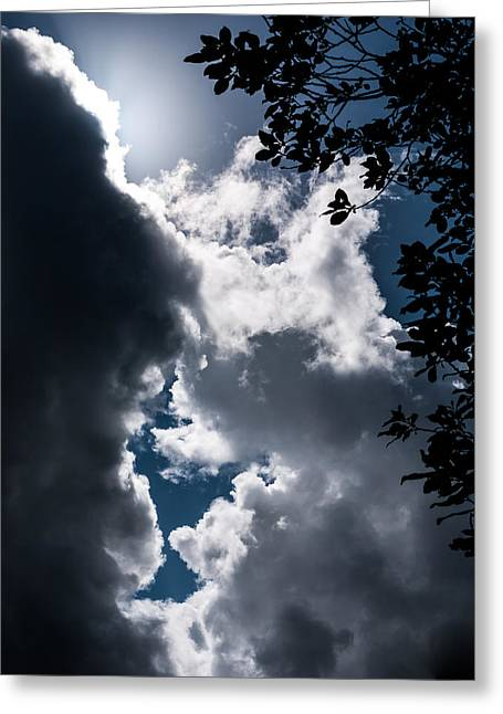 Lightscapes Greeting Cards - Between a Tree and the Sky Greeting Card by Hakon Soreide