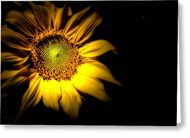 Sunflowers Greeting Cards - Between Here And There Greeting Card by Bob Orsillo